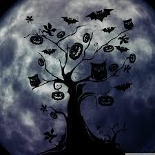halloween wall paper halloween owls and bats hd desktop wallpaper widescreen high