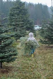 organic christmas trees in washington state natural baby mama
