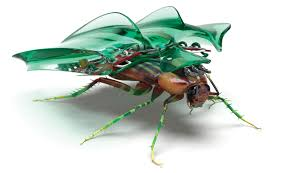 how to build your own cockroach cyborg popular science