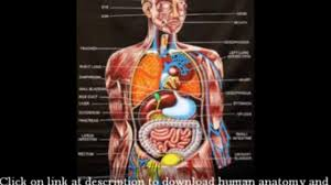 Anatomy Videos Free Download Human Anatomy Videos For Medical Students With Referring Of Human