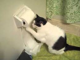 Toilet Paper Funny Funny Cat Unrolls Toilet Paper Youtube