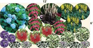 pre planned perennial garden layout hydrangea all summer beauty