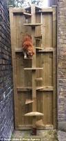 best 25 cat stairs ideas on pinterest cat climbing shelves cat
