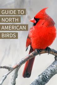 Audubon Backyard Bird Count by Best 25 Bird Guides Ideas On Pinterest Bird Identification