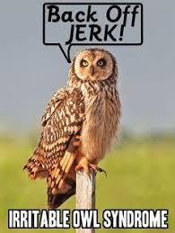 Owl Birthday Meme - owl puns kappit