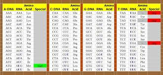 comparing the genetic code of dna to binary code