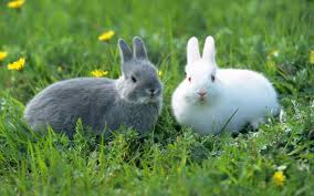 rabbit rabbit brown and white rabbit wide 1440x900