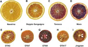 retrotransposons control fruit specific cold dependent