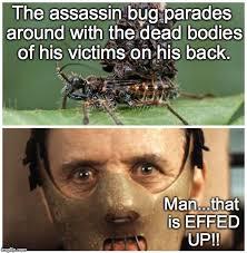 Shocking Meme - doodlebug s images imgflip