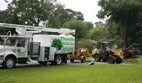 tree crew now tree removal tree trimming davis tree service