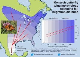 Monarch Migration Map Micah Freedman Micah Freedman Twitter
