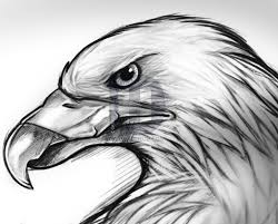 how to sketch an eagle step by step drawing guide by darkonator