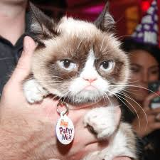Grumpy Cat Yes Meme - grumpy cat popsugar tech