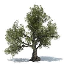olive tree power christchurch whanganui nz