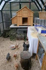 Backyard Quail Pens And Quail Housing by Easy To Build Quail Cage And Holds Up To 5 Quail Easy Chicken