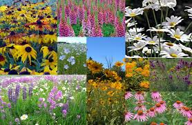 native plant society of new jersey the xerces society northeastern native plant pollinator mix