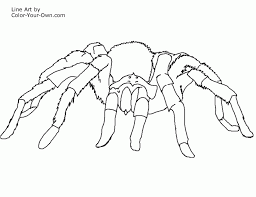 Spider Color Pages New Free Printable Coloring Pages Electric Eel Tarantula Spider by Spider Color Pages