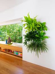 plants for your home garden pinterest living walls wall