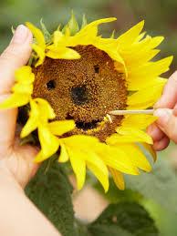 kitchen garden ideas garden ideas sunflower flower kitchen garden ideas big sunflower