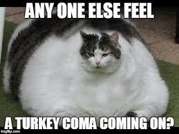 Grumpy Cat Coma Meme - fat cat imgflip