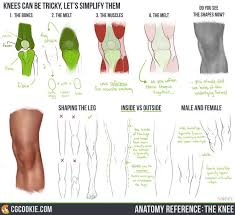 Female Anatomy Reference 111 Best Differences Between Male And Female Anatomy Images On