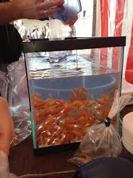 halloween carnival games interview with a purim carnival goldfish the official site of