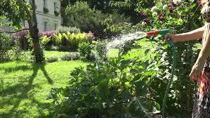 beautiful farm woman with cap watering garden colorful