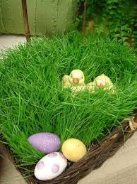 bulk easter grass 7 best easter grass alternatives images on easter