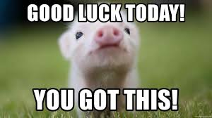 Good Luck On Finals Meme - luck today you got this cute pig meme generatorrhmemegeneratornet