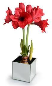 Silk Amaryllis Flowers - new growth designs faux amaryllis plant in mirror cube u0026 reviews