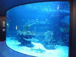 Home Aquarium by Concept Design Home Home Aquarium Sharks Photos