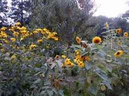 allbirch pollinator garden