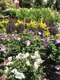 garden family boyert u0027s greenhouse u0026 farm garden center medina county