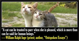 Awesome Quotes About Cats Being - 50 famous quotes about cats cattime