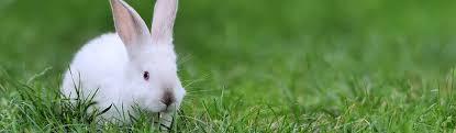 rabbit bunny is your bunny healthy