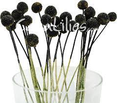 billy balls craspedia billy balls black sparkle drumsticks greenery