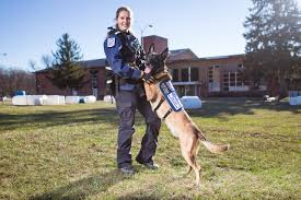 belgian malinois rescue va when disaster strikes this k 9 search and rescue team is already