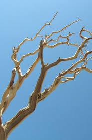 manzanita branches wholesale tree branches sale 20 60 saveoncrafts