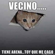 Gato Meme - gatos memes gatos chistes gatos risa gatos risa meme gatos