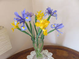 iris october feature plant candelo blooms