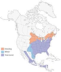 habitat si e social eastern bluebird distribution migration and habitat birds of