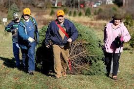 where to cut your own christmas tree in northeast ohio cleveland com