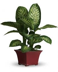 51 best eco friendly house plants air purifiers images on common
