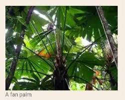 Adaptations Of Tropical Rainforest Plants - what are some of the adaptations of the plants of the tropical