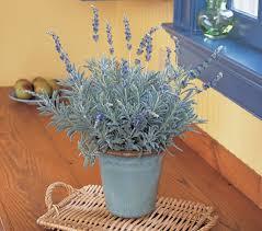 Plants For Bedroom Best Plants For Bedroom To Help You Sleep Better