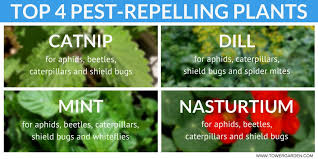 the ultimate guide to garden pest control
