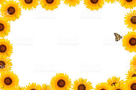 sunflower frame border with butterfly xxxl stock photo more