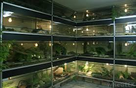 what is a terrarium with pictures