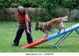 belgian sheepdog agility woman with a belgian shepherd dog walking on the roadside in the