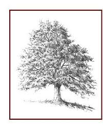 13 best images on drawing trees drawings and tree